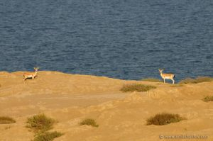 Shirvan National Park